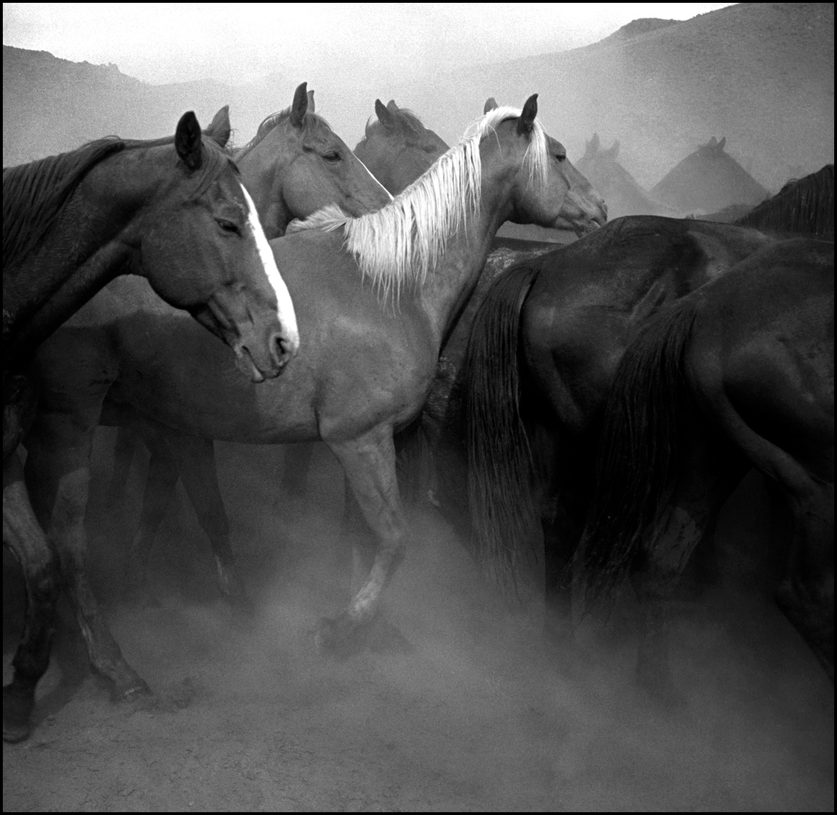 Horses-Ranch-Nevada_Remuda, Spanish Ranch