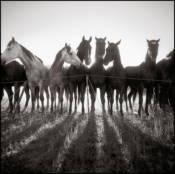 Horse Shadows, IL Ranch, Nevada