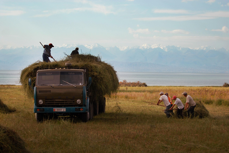 Loading a truck with hay by hand, near Lake Issyk-Kul, Kyrgyzstan