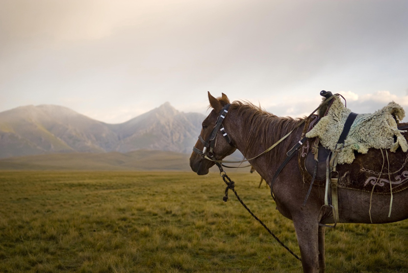 Horse with traditional sheepskin covered saddle, Son-Kul Lake, Kyrgyzstan
