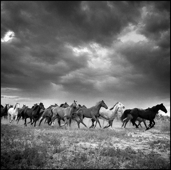 Horses-Running-Remuda #6, Spanish Ranch, NV