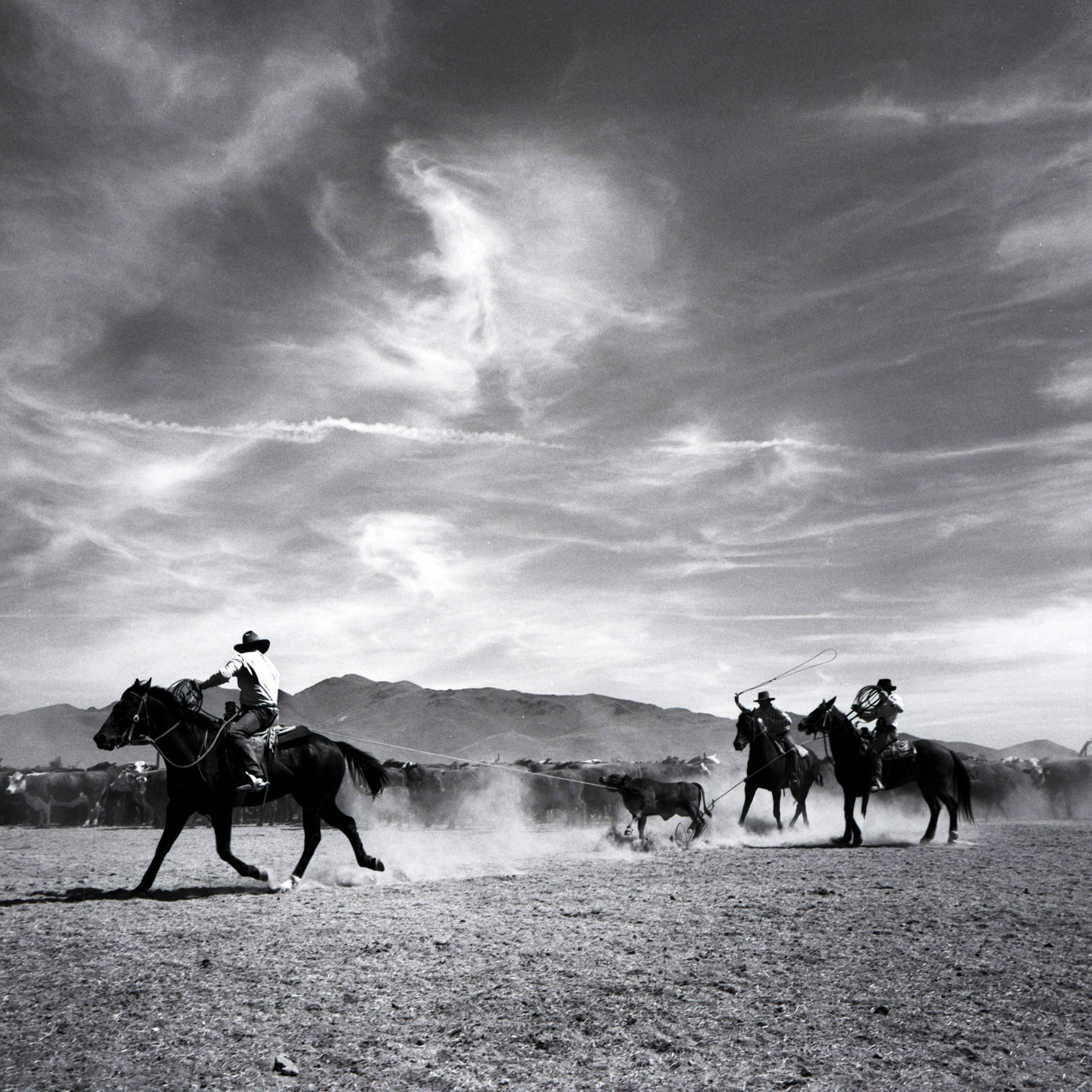 Roping, TS Ranch, NV