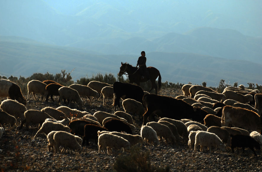 Young Shepherd girl tending her flock on the banks of Lake Issyk-Kul, Kyrgyzsgtan