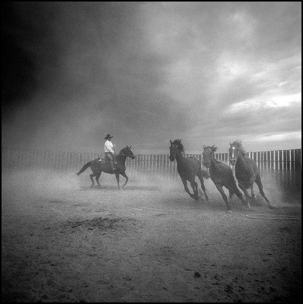 Three Horses,  Martin Black,  Idaho